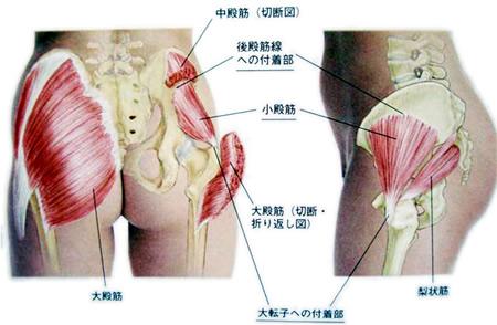 殿筋の痛み~お尻の筋肉が原因の...