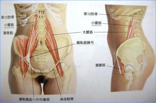 腰の筋肉の図