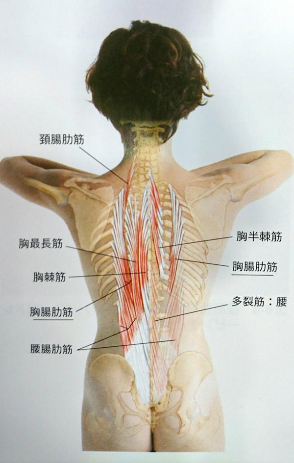 痛み あばら骨 左あばら骨の下が痛い!意外な3つの原因とは?